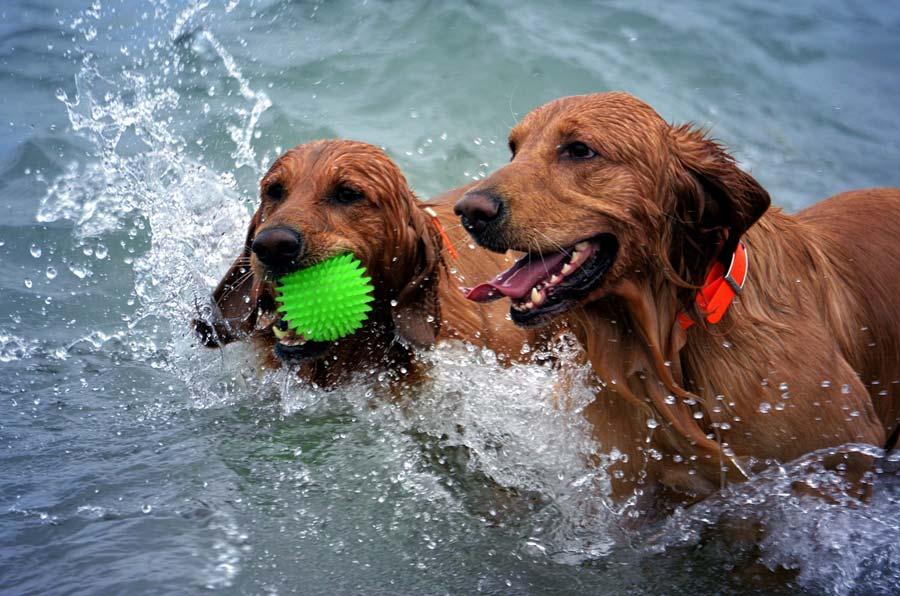 Costa Blanca Urlaub mit Hund Vacaciones con perro - Holidays with dog