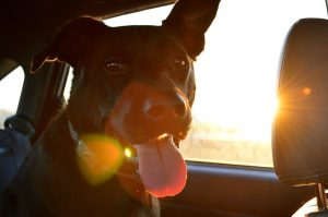 Costa Blanca Urlaub mit Hund Foto Holiday with dog - vacaciones con perro 15