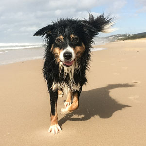 Costa Blanca Urlaub mit Hund Foto Holiday with dog - vacaciones con perro 02