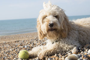 Costa Blanca Urlaub mit Hund Foto Holiday with dog - vacaciones con perro 01