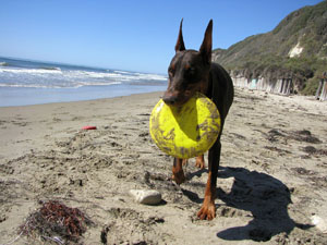 Costa Blanca Urlaub mit Hund Foto Holiday with dog - vacaciones con perro 03