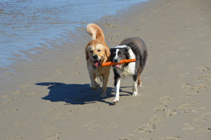 Costa Blanca Urlaub mit Hund Foto Holiday with dog - vacaciones con perro 07