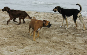 Costa Blanca Urlaub mit Hund Foto Holiday with dog - vacaciones con perro 09
