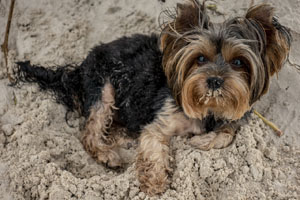 Costa Blanca Urlaub mit Hund Foto Holiday with dog - vacaciones con perro 11